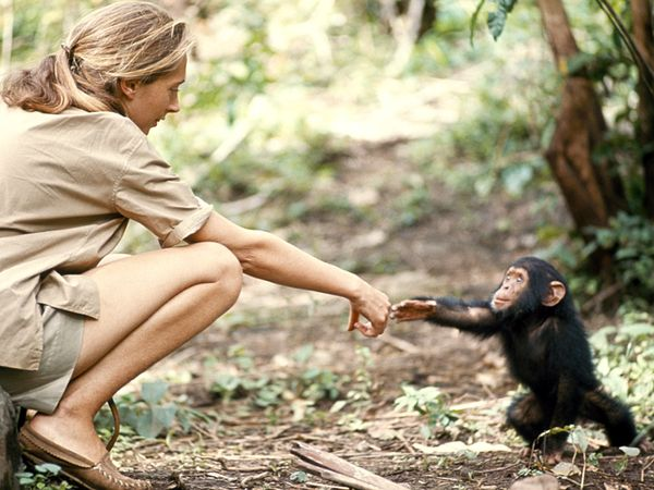 a study on the chimpanzee of africa and its behavior Chimp eden is situated within the beautiful 1,000 hectare umhloti nature reserve, the jane goodall institute (jgi) south africa chimpanzee sanctuary is home to chimps that have been misplaced from their natural habitats in africa.